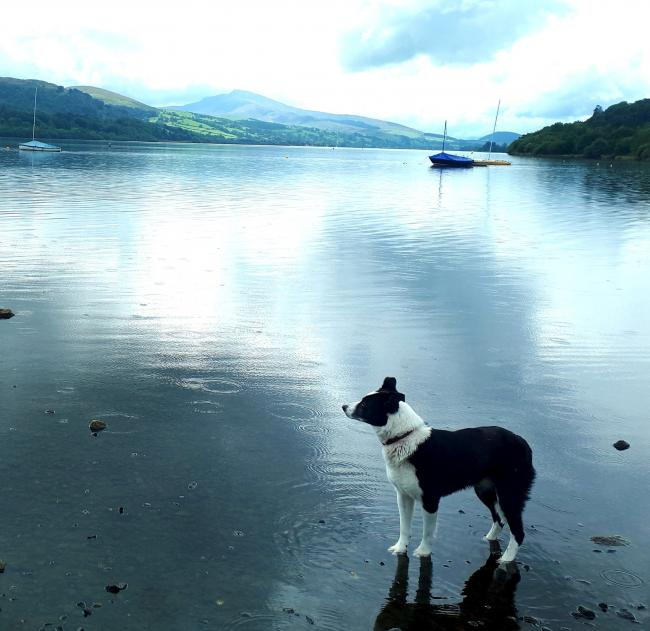 TRYING to avoid the stormy weather.That's the topic of our picture of the week.This shot has been submitted by Mark Murray, from St Asaph, and it shows his border collie Kez at Llyn Tegid, Bala, with a storm heading her way.If you would like to supply