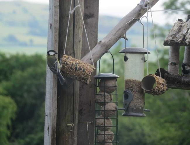 A homemade bird feeder project including in one of the bags> Picture: Facebook/ Denbigh Carnival