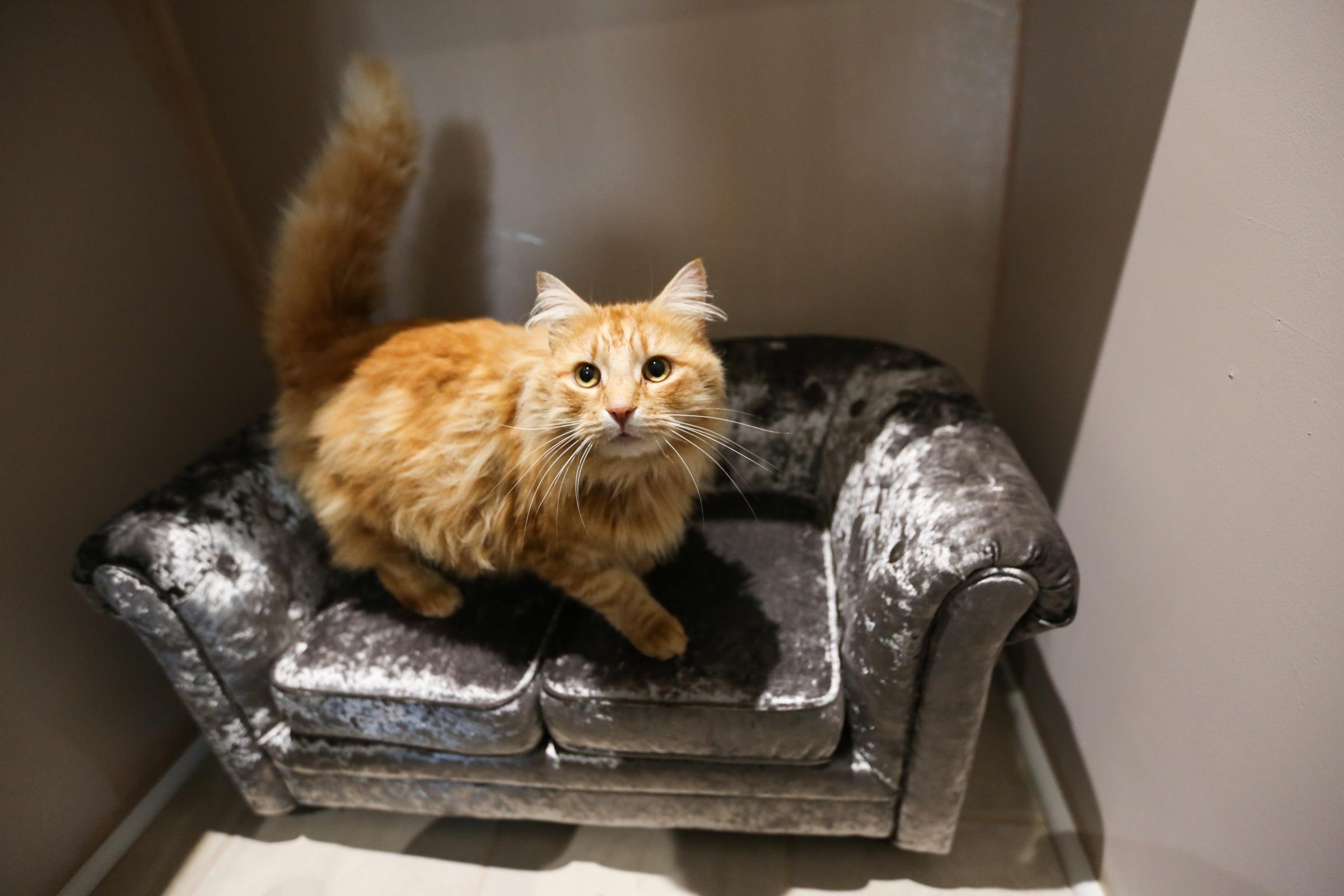 The Pet Place in Bylchau is opening a five star hotel for cats. Pic: Each cat has a bed and a luxury couch. GA100418C.