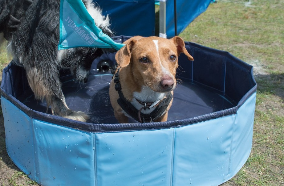 Keep your pets cool, warn RSPCA. Picture: RSPCA Cymru