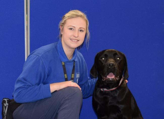 One year on: Bobby the guide dog on his first day of training. Picture: Guide Dogs Cymru