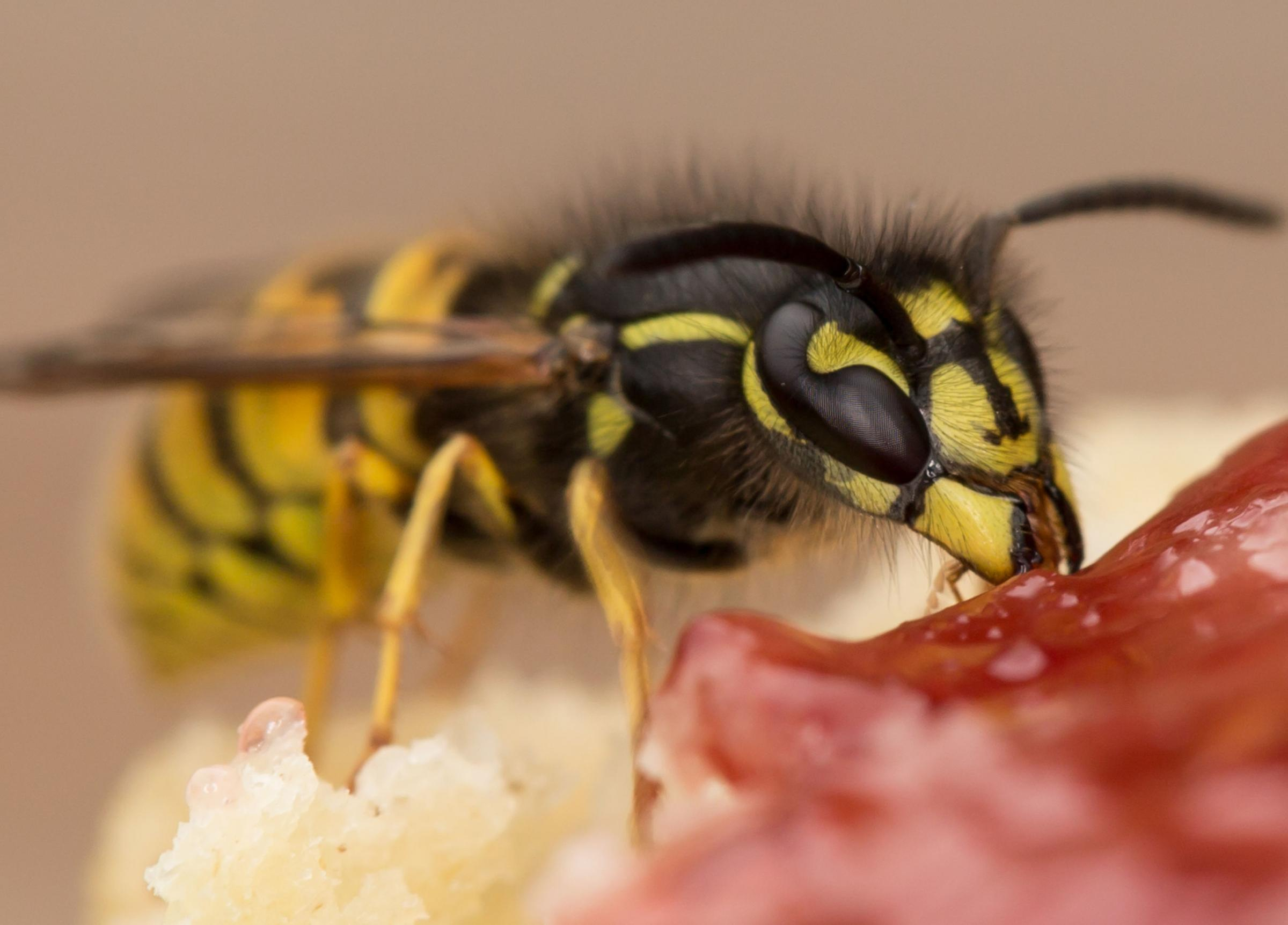 A wasp sting led to a man's death in Denbighshire.