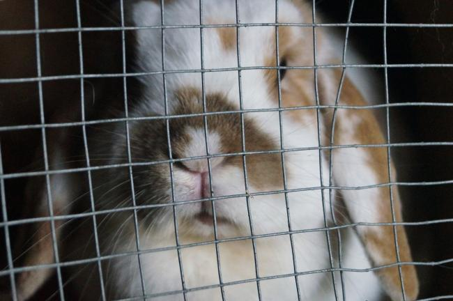 Why Pets at Home will NOT sell you a rabbit this Easter